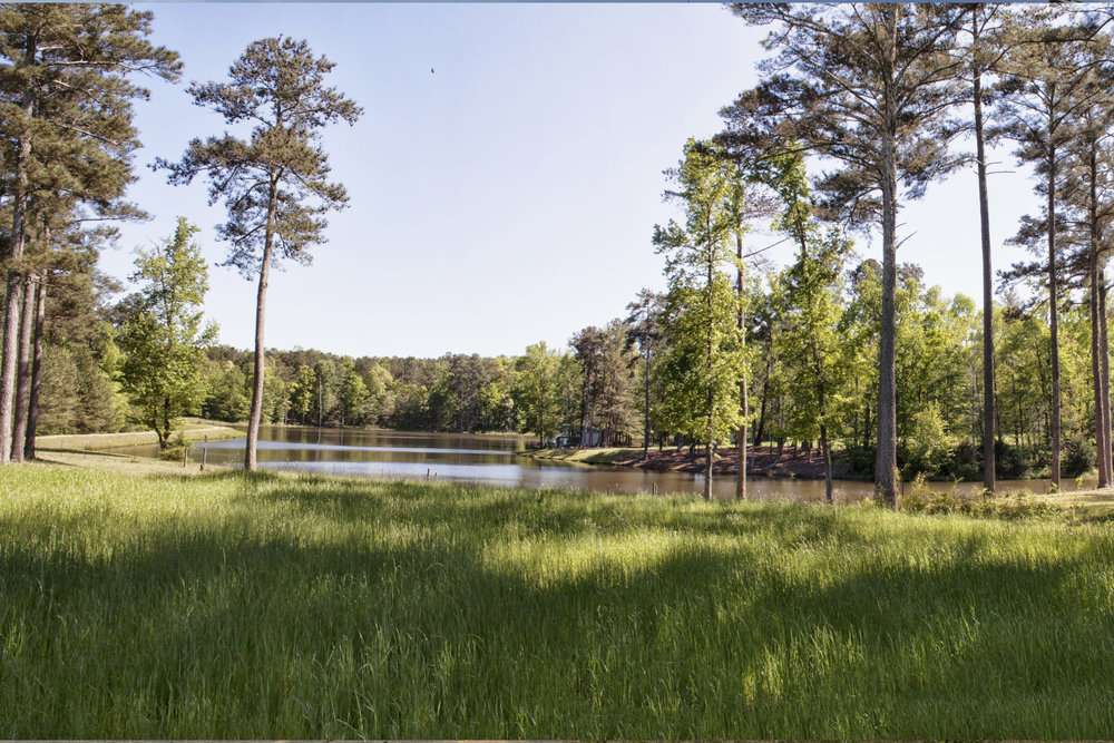 pond overlook.jpg