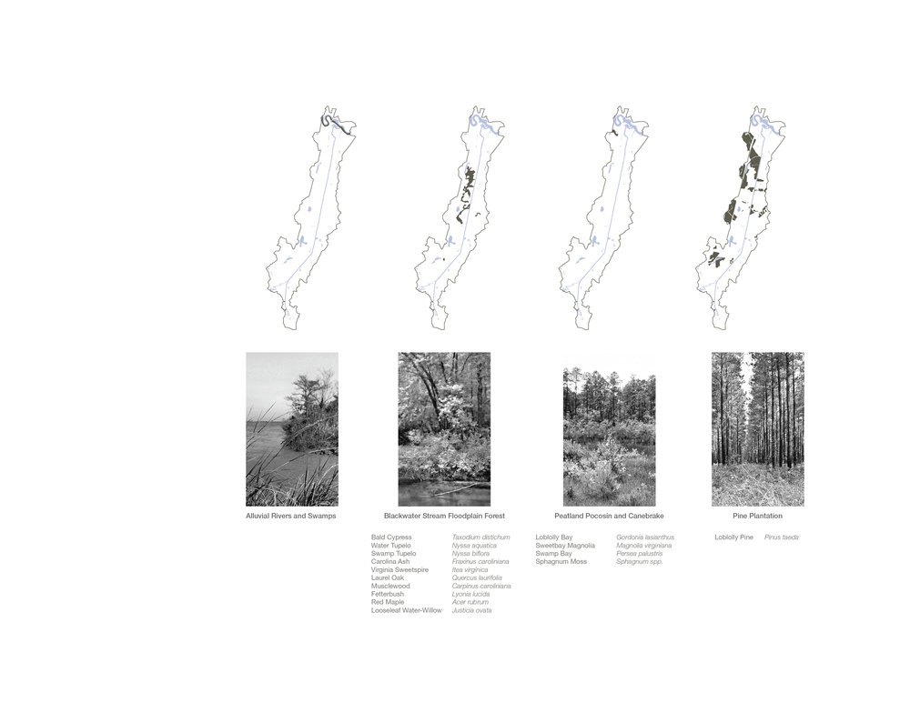 Plant Communities - 1.jpg