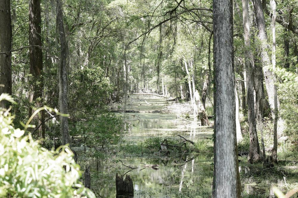 Brunswick-Altamaha_canal_-2.jpg