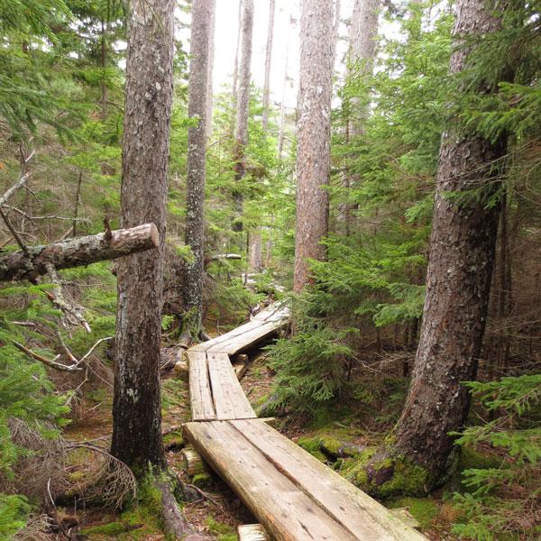 Forest Walk Along Long Pond in Acadia National Park