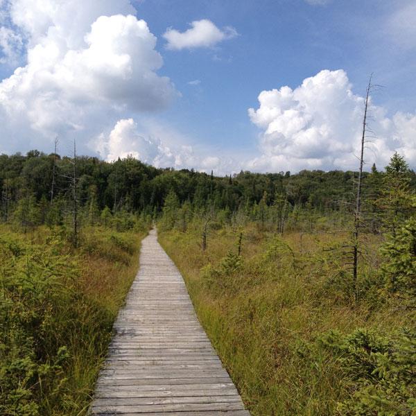Walking Path Around Paul Smiths Near Lake Clear, New York