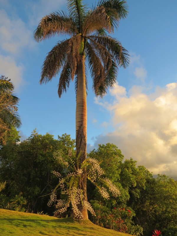 royal-palm-with-orchids-png