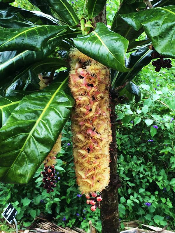 Cut nut bloom 1