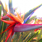 bird-of-paradise-nggid03615-ngg0dyn-140x140x100-00f0w010c011r110f110r010t010.png