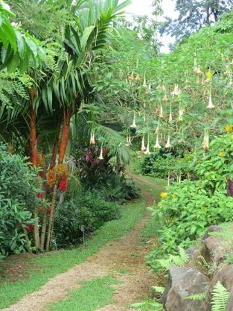 Charming Princeville Botanical 1
