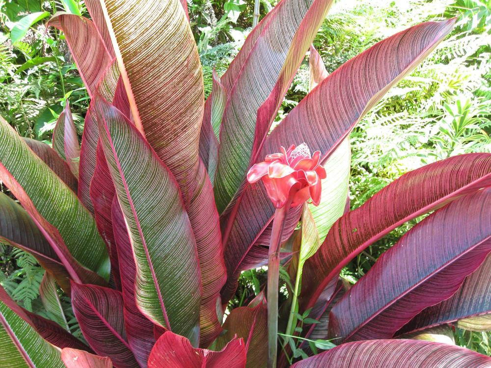 princeville-botanical-9.jpg