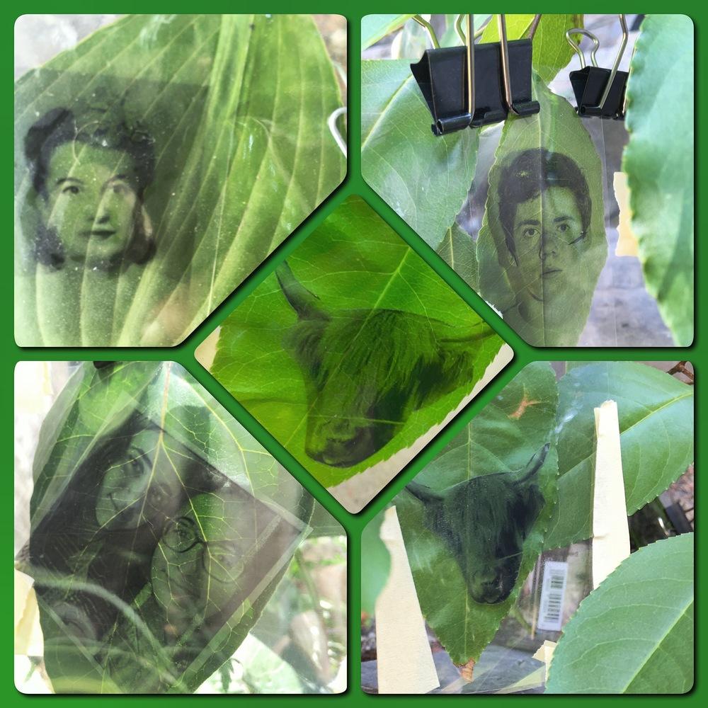 Chlorophyll Printing