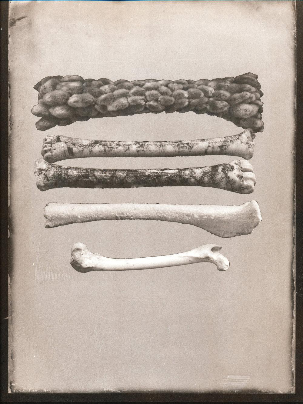 Willow Bones