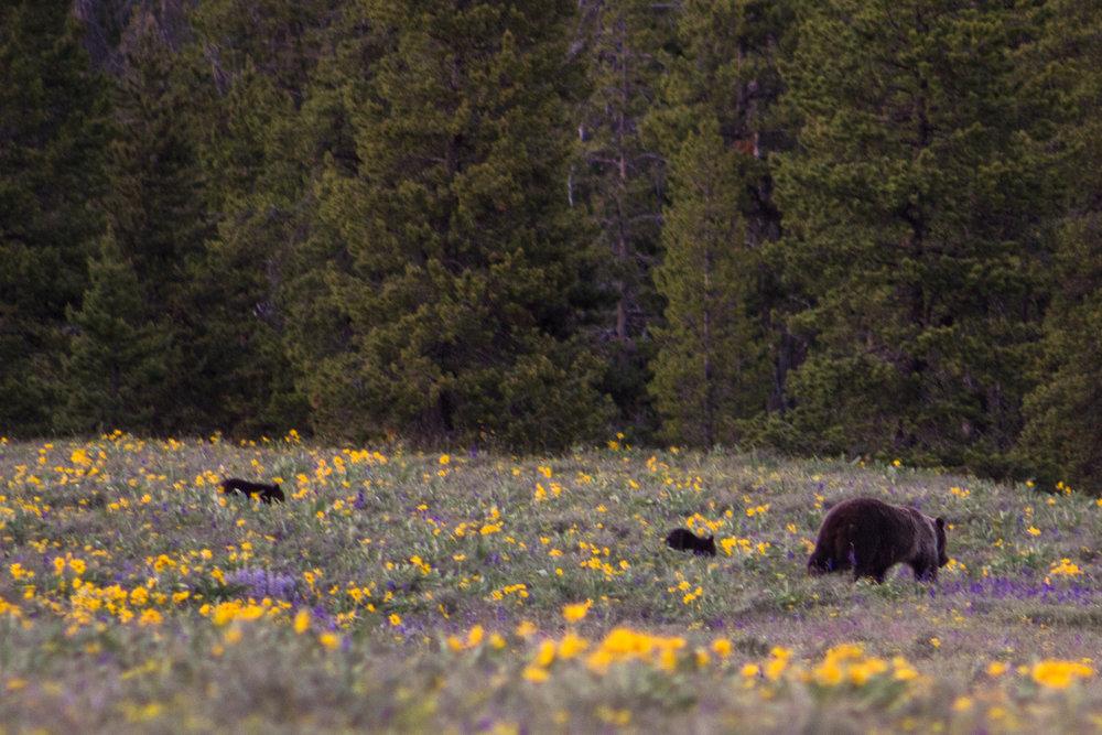 Yellowstone-29.jpg