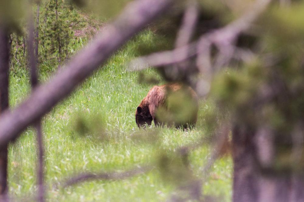 Yellowstone-38.jpg