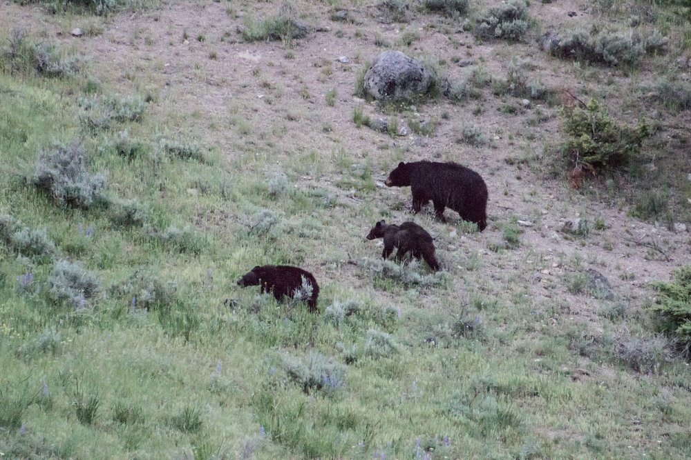Yellowstone-122.jpg