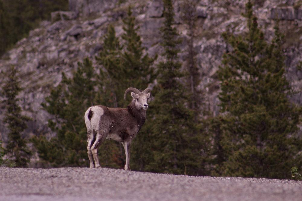 Banff and Alaska Highway-72.jpg