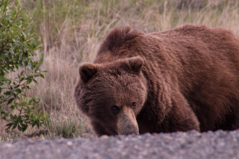 Banff and Alaska Highway-92.jpg