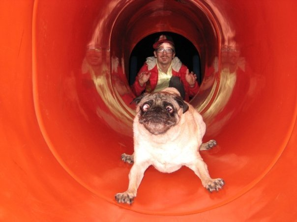 http://weknowawesome.com/wp-content/uploads/2011/09/pug-tube-slide.jpg