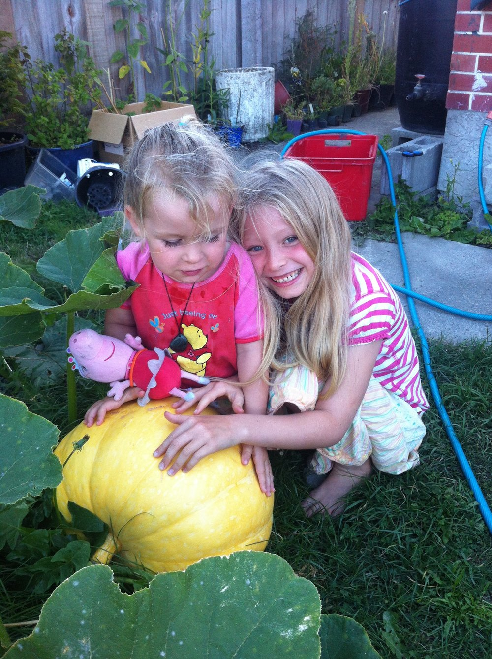 Growing giant pumpkins - great fun for the kids
