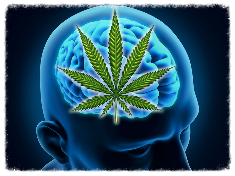 Marijuana is a battle for the brain