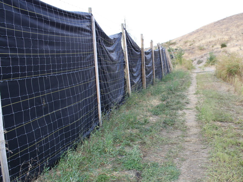 An illegal marijuana farm shielded from view with fencing that investigators believe was meant to mimic the fencing around legitimate pot farms.