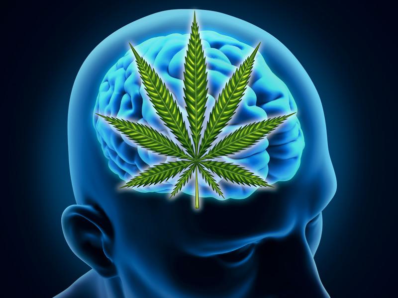 dt_150608_brain_marijuana_cannabis_800x600jpg.jpg