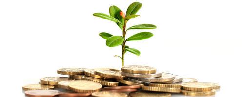 plante_i_penger-1.jpg