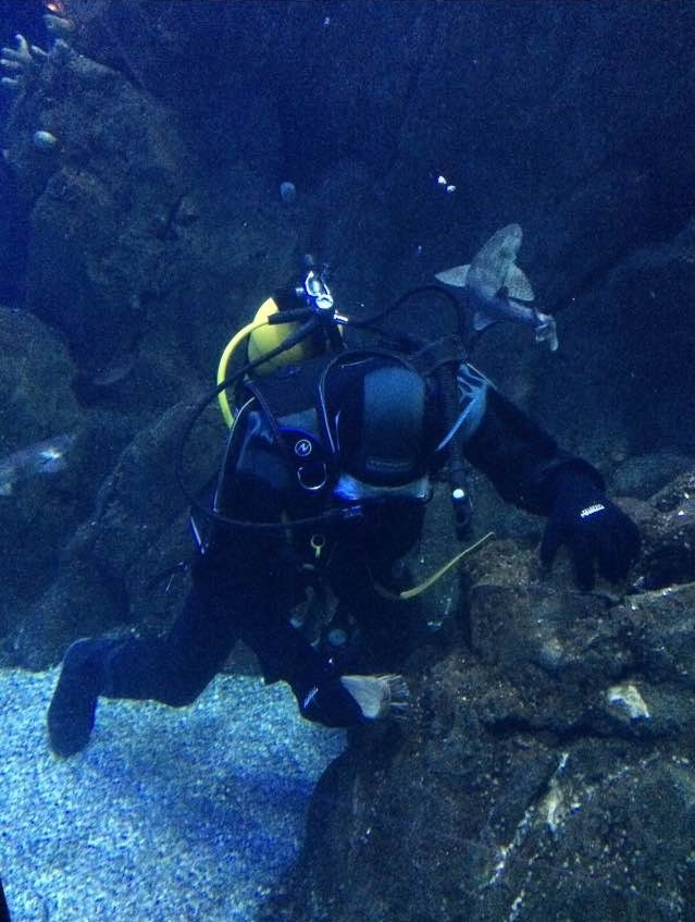 Cleaning the Eddystone Reef tank in the National Marine Aquarium.
