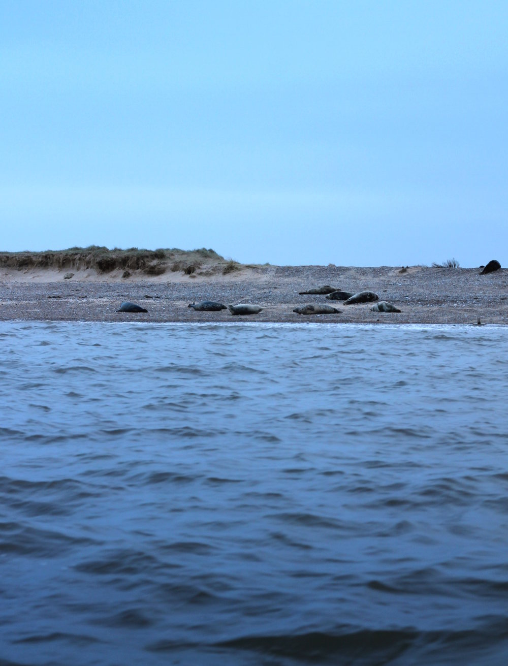 1. Can you spot the seals.jpg