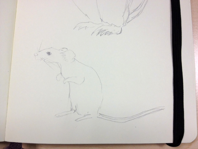 Mouse drawing by Hannah Doyle