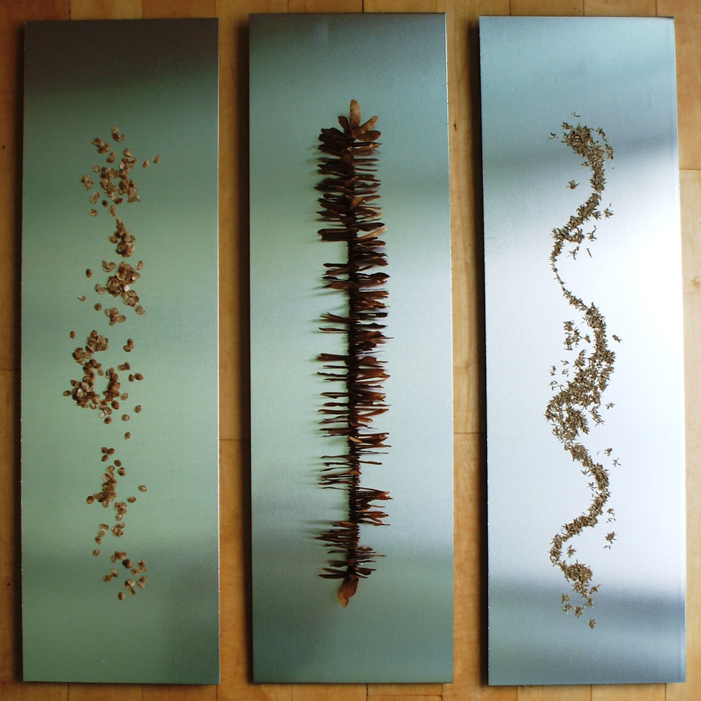 SEEDS Seeds on aluminium, 82cm x 24cm each panel Available to buy, please contact me.