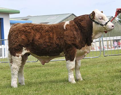 Weikel calf.jpg