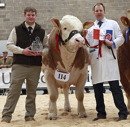 Perth at Stirling Bull Sales May 2012.jpg