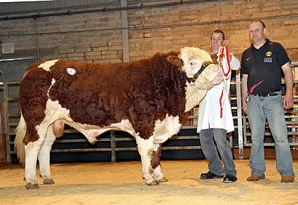 The top priced bull at 3,400gns was the third prize winning Pointfarms Columbo shown by Richard Rodgers, and owned by Matthew Cunning, Glarryford.