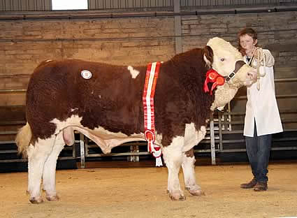 The male and supreme champion was Glenock Cannon Ball, which sold at 2,600gns for Stephen Millar, Newtownstewart. At the halter is Jack Smyth.