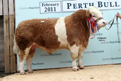 Overall Champion & Senior Champion bull Copper Mill Admiral sold by Mr & Mrs Goldsborough, for 4,200gns.