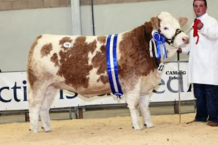 Reserve Female Champion Denizes Hannadante 8 also bred and owned by M A Barlow sold at 2,600gns.