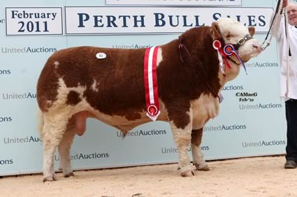 Intermediate Champion bull Gouknest Andy Pandy sold by Mr W D Smith for 6,500gns.