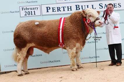 Junior Champion Killynure Actionman bred by Mr R S R Porter, sold by Mr L A Richardson for 10,000gns.