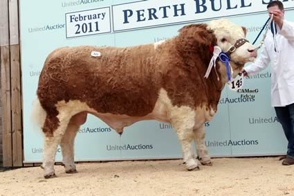 Reserve Junior Champion Woodhall Alabama sold by Mr H Macaskill for 7,500gns.