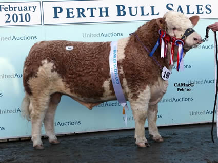 Supreme and Junior Champion, Auchorachan Wizard, bred by D. & R. Durno and Sons, who sold at 20,000 gns. to Ballinalare Farm Herd