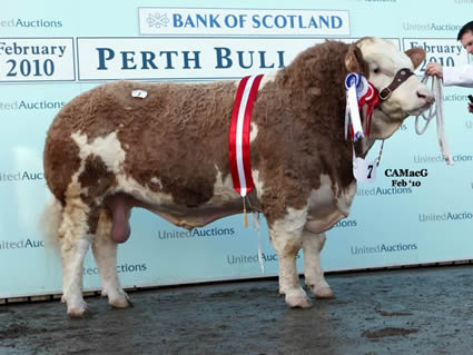 Banwy Wonderboy exhibited by R. E. Jones, lifted the Senior Championship before selling at 9,500 gns to the Popes Herd