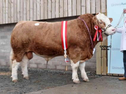 Intermediate Champion, Blackford Worzel 2 forward from J. C. McLaren and Partners, who sold at 20,000 gns to Manor Park Herd