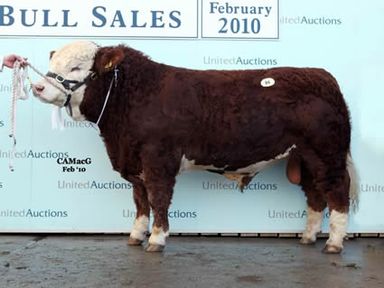 Reserve Intermediate Champion, Kilbride Farm Warren sold at 9,500 gns for W. H. Robsons & Sons