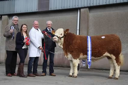 Femle and reserve supreme champion was Derrycallaghan Crown Princess shown by Harold Stubbs, Lisnaskea. Included are John Henning, head of agricultural relations, Danske Bank, sponsor; Zara Stubbs, Irvinestown, judge; and Nigel Glasgow, chairman, NI Simmental Club.