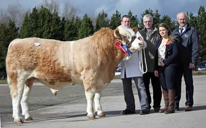 Hiltonstown Cyclone scooped the reserve male championship and sold at 4,600gns for Richard Rodgers, Portglenone. Adding their congratulations are John Henning, head of agricultural relations, Danske Bank, sponsor; Zara Stubbs, Irvinestown, judge; and Nigel Glasgow, club chairman. Picture: Julie Hazelton