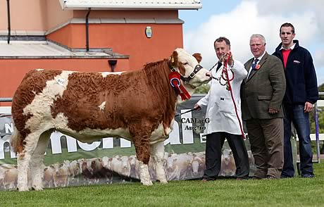 The supreme champion and 12,000gns sale topper was Cleenagh Avon bred by Adrian Richardson, Maguiresbridge. Adding their congratulations are Hector Macaskill, judge; and Ashley Crawford, Irwin Feeds, sponsor. Cleenagh Avon