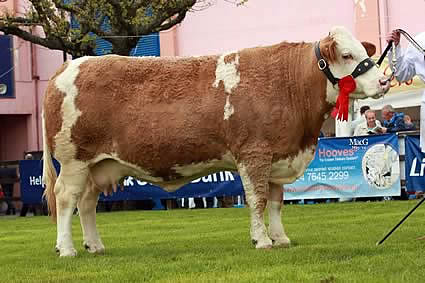 Reserve female champion was Hockenhull Natalie 34th from Mike Frazer's Bruces Hill Cattle Co, Templepatrick.