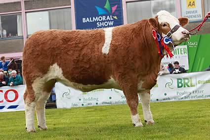 Female champion and reserve supreme champion was Ballinlare Farm Buttercup bred by Joe Wilson, Newry