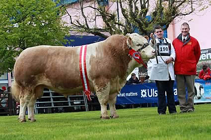 Male champion and supreme overall champion was Hockenhull Ali Baba, shown by Richard McKeown, and owned by Mike Frazer, Bruces Hill Cattle Company, Templepatrick.