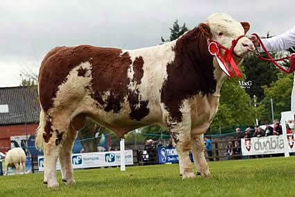 Alan and Ann Kennedy, Upper Ballinderry, owned the junior bull class winner and reserve junior champion Lurgill Cooldude.
