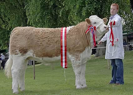 The Woodcraft Kitchens (Kilrea) junior heifer derby champion, female champion and supreme overall Simmental champion, was Lisglass Clover 2nd, shown by Christopher Weatherup