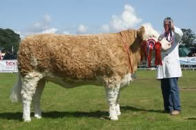 Boddington Estates Overall champion. Sterling Krumpets Britney