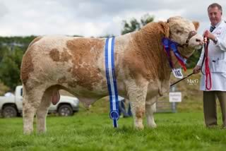 Adrian Richardson, Maguiresbridge, exhibited the junior bull Cleenagh Cannon, winner of the DANI Rosebowl, male championship and reserve supreme championship